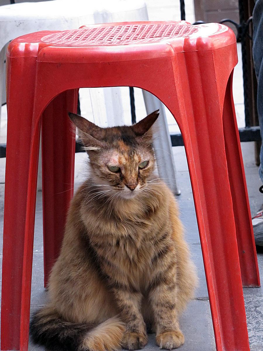 Kedi Damı